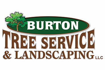 Tree Landscaping Services My Local Pros
